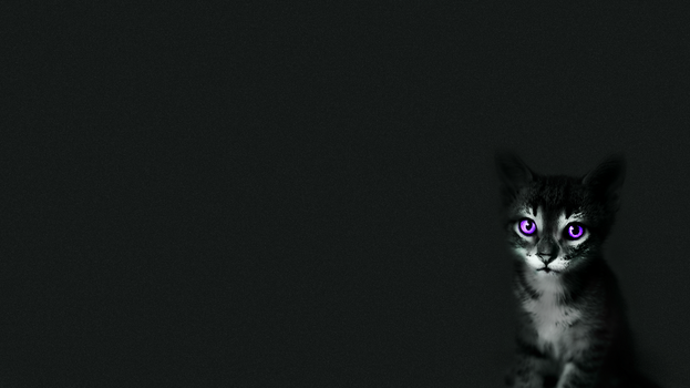 Cat wallpaper by Hamol