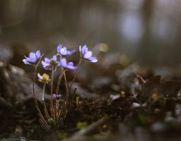 Forest Flowers by Justine1985