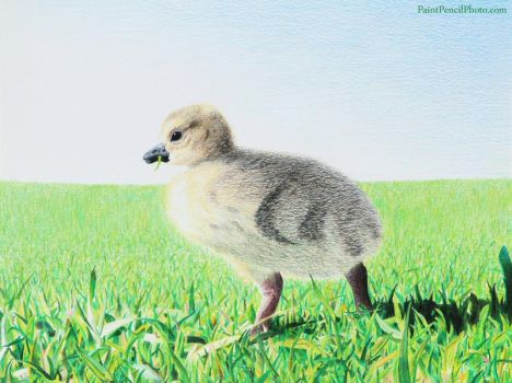 Goose by PaintPencilPhoto