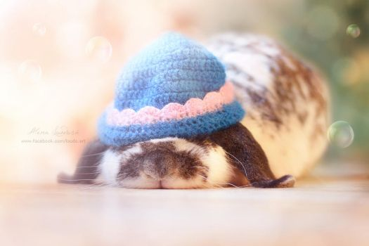 Sleepy rabbit by aledobo