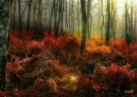 In the forest by Louis-photos