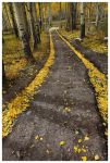 The Golden Road by Nate-Zeman