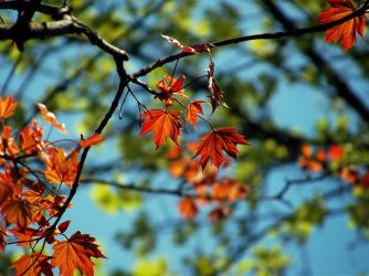 Colorful leaves by Caolinite