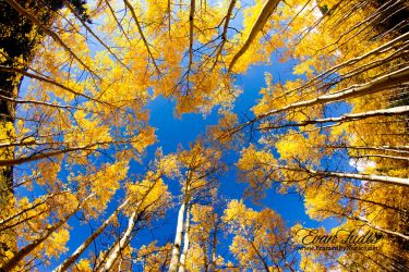 Up the Aspens by FramedByNature