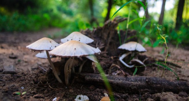 Magic Mushrooms RAW by 7ucky