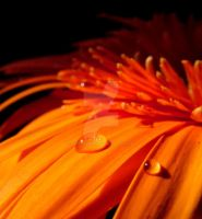 water drops 2 by smileyphotography