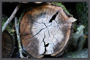 Cracked Wood by Sharandra