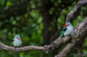 A Couple of Fishers by AnneMarks