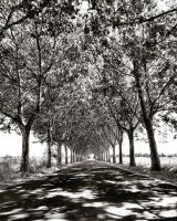 beautiful road which I discovered today by BenHeine