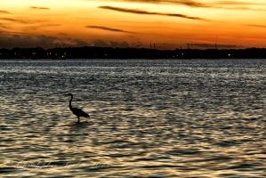 Life in the Bay by cdpstudios