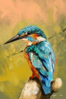 Kingfisher Colour Study by BisBiswas