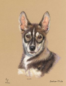 Siberian husky... 4 by Indian-Tribe