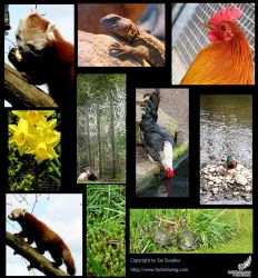 Nature Photography Compilation by soudou