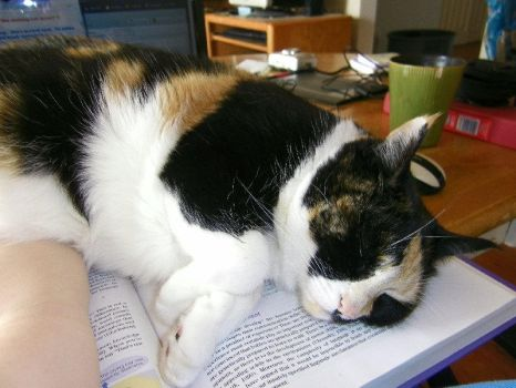 Cat's Opinion of Psychology by SiverCat
