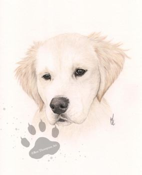 Scooter the retriever pup by RozThompsonArt