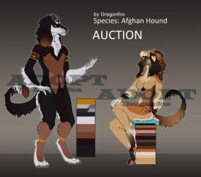 SALE Adopt|AUCTION Afghan Hounds {Closed} by DragonFoxAdopts
