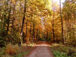 autumn forest by Mittelfranke
