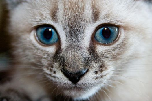 Miss Penny Blue Eyes by psivamp