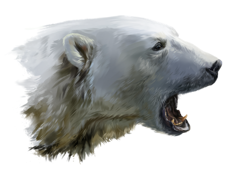 A polar bear growls by Kajenna