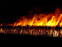 sugar cane fire by ness5378