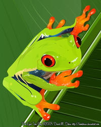 Red Eyed Tree Frog by bombhaus