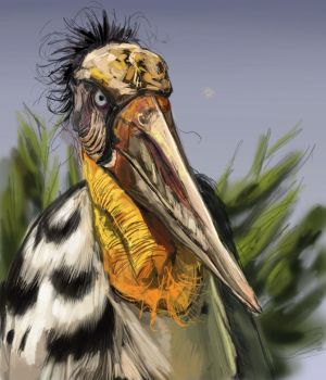 Ugly Bird by suidalg