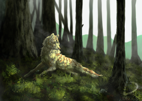 Forest by Dezigre