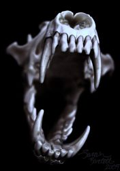 Coyote Skull in Blue by NaturePunk