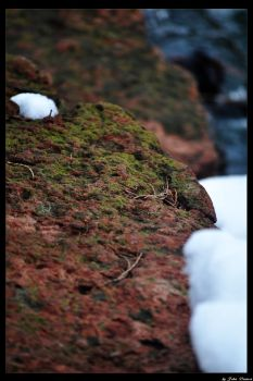 Winter Moss by JohnDamen