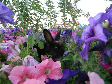 Bunny among flowers by silviubacky
