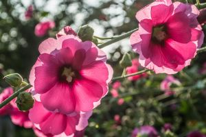Pink-and-Green by kabre