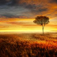 Alone in the sunset by Teodora-Chinde