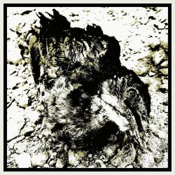 Animal Absurd Decomposition. by Javoproud