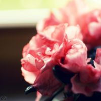 soft and rose by lisarime