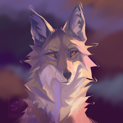 Coyote + SPEEDPAINT by Sevil-s