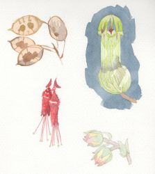Plant Studies by Longhair