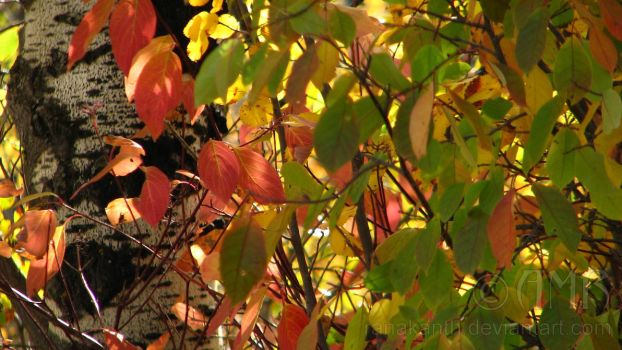 Autumn Leaves 3 by Ranakanth