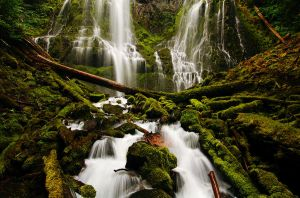 Bury My Heart at Proxy Falls by greglief