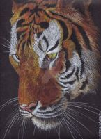 bengal tiger by ThessaGreenleaf