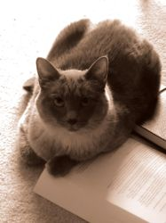 Study Cat Is Studying by Karis-Surya