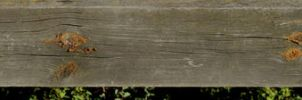 Wood Texture C - 8k by AGF81