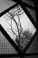 Window by GrannyJoan