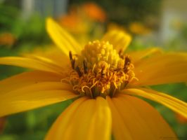 Yellow. by Sparkle-Photography