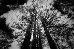 Woods4 by P3droD