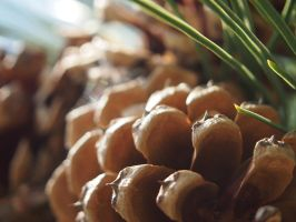 Pine Cone Macro 1 by Meagharan
