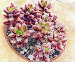 Red Succulent by KingVahagn