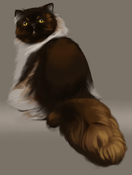 150418_persiancat by PataYoh