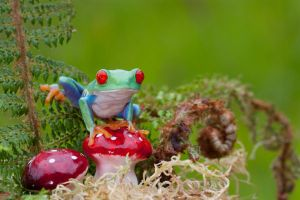The Frog and toadstools 2 by AngiWallace