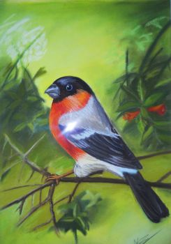 bird in pastel by nagogore