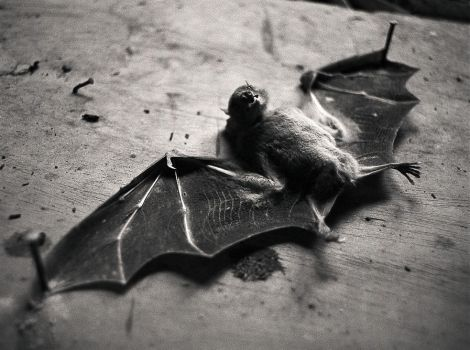 Bat by yox